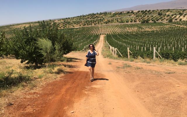 Виноградники Армении и огненная почва